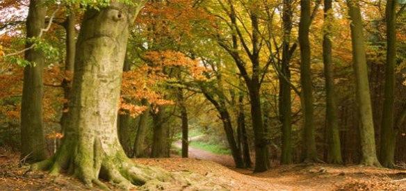 delamere-autumn